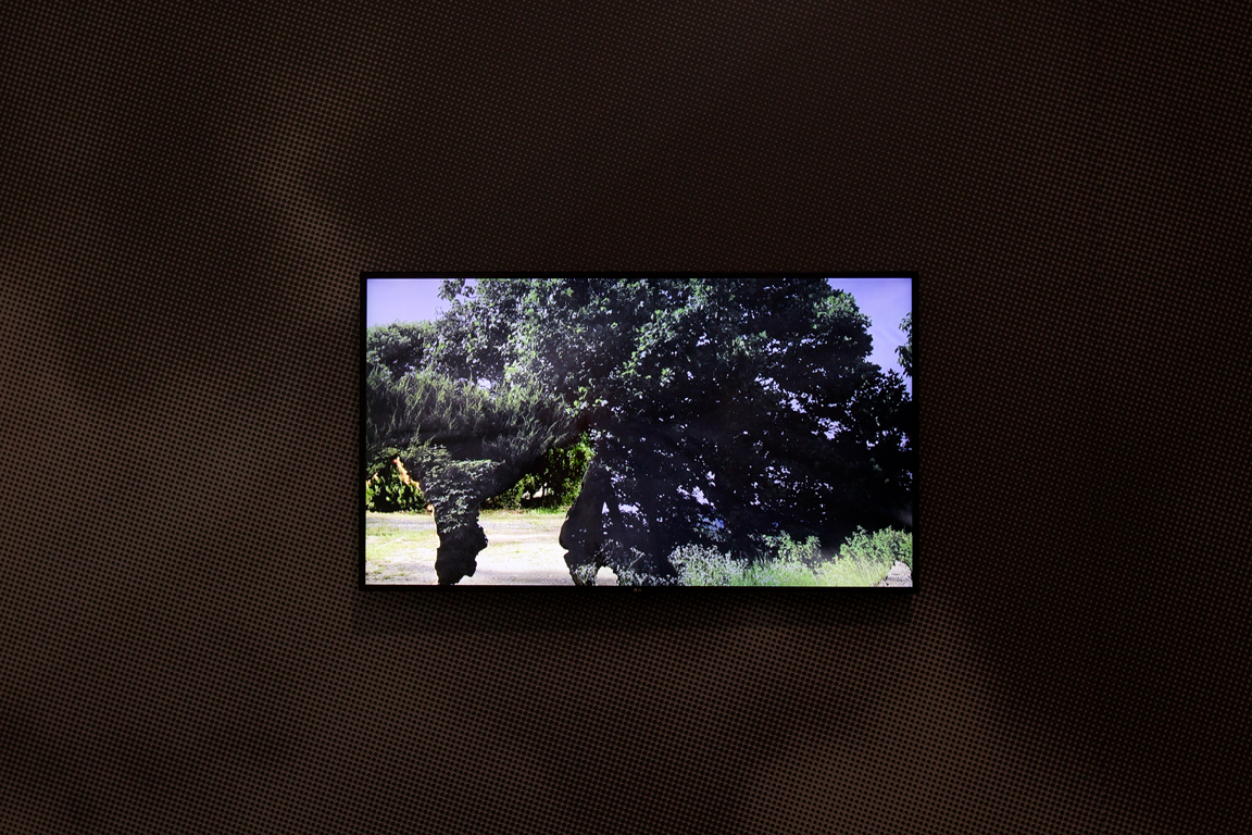 Vanished Landscape, 2013, Sehee Sarah Bark, Video, Photo courtesy Gwangju Biennale Foundation.