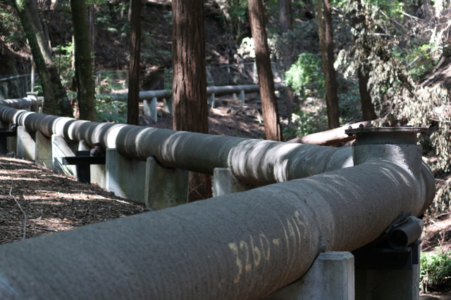 Wastewater Walk: wastewater pipe through redwood ravine, 2015, FICTILIS, digital photograph, © FICTILIS. (Used with Permission.)