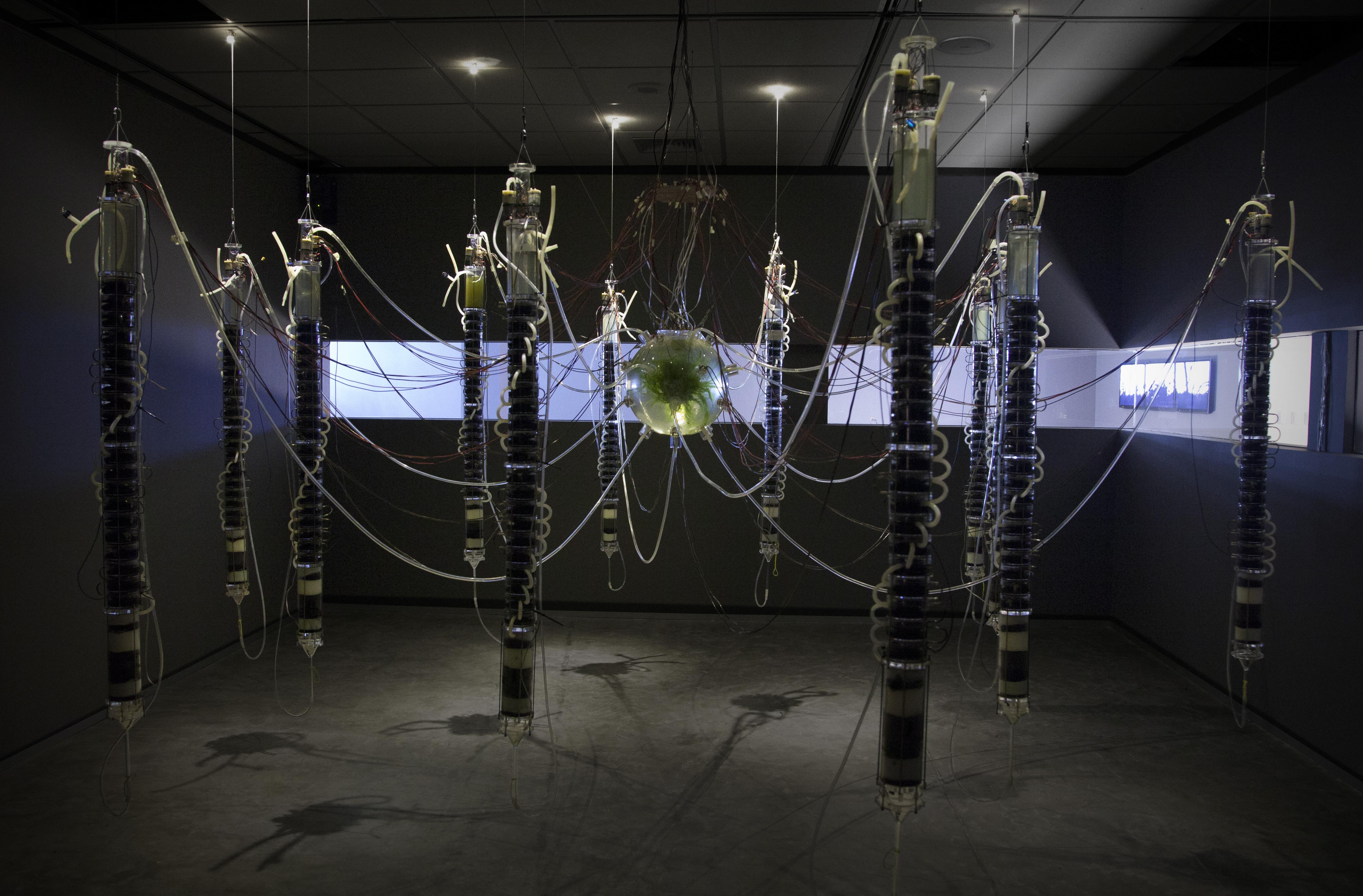 Gilberto Esparza, Plantas Autofotosintéticas, 2013-2014. Art installation. Espacio Fundación Telefónica, Lima. Used with permission.